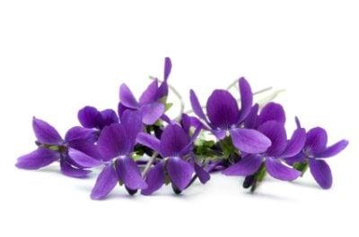 Violet Flower -