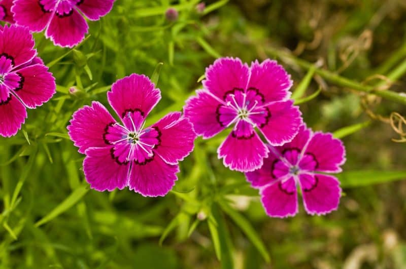 Garden Flowers Are Broken Down Into Three Main Types: Perennials, Annuals,  And Biennials. Perennial Flowers Return Year After Year With Little To No  ...
