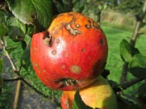 Types of Plant Diseases - Blight