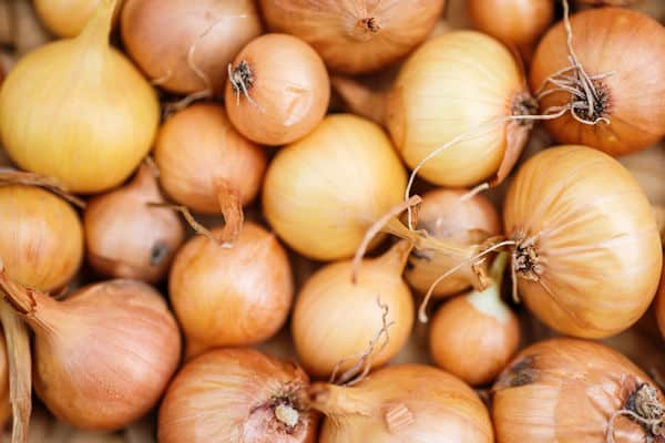 easiest fruits and vegetables to grow - onions