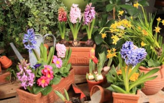 flowers in pots - how to repot a plant